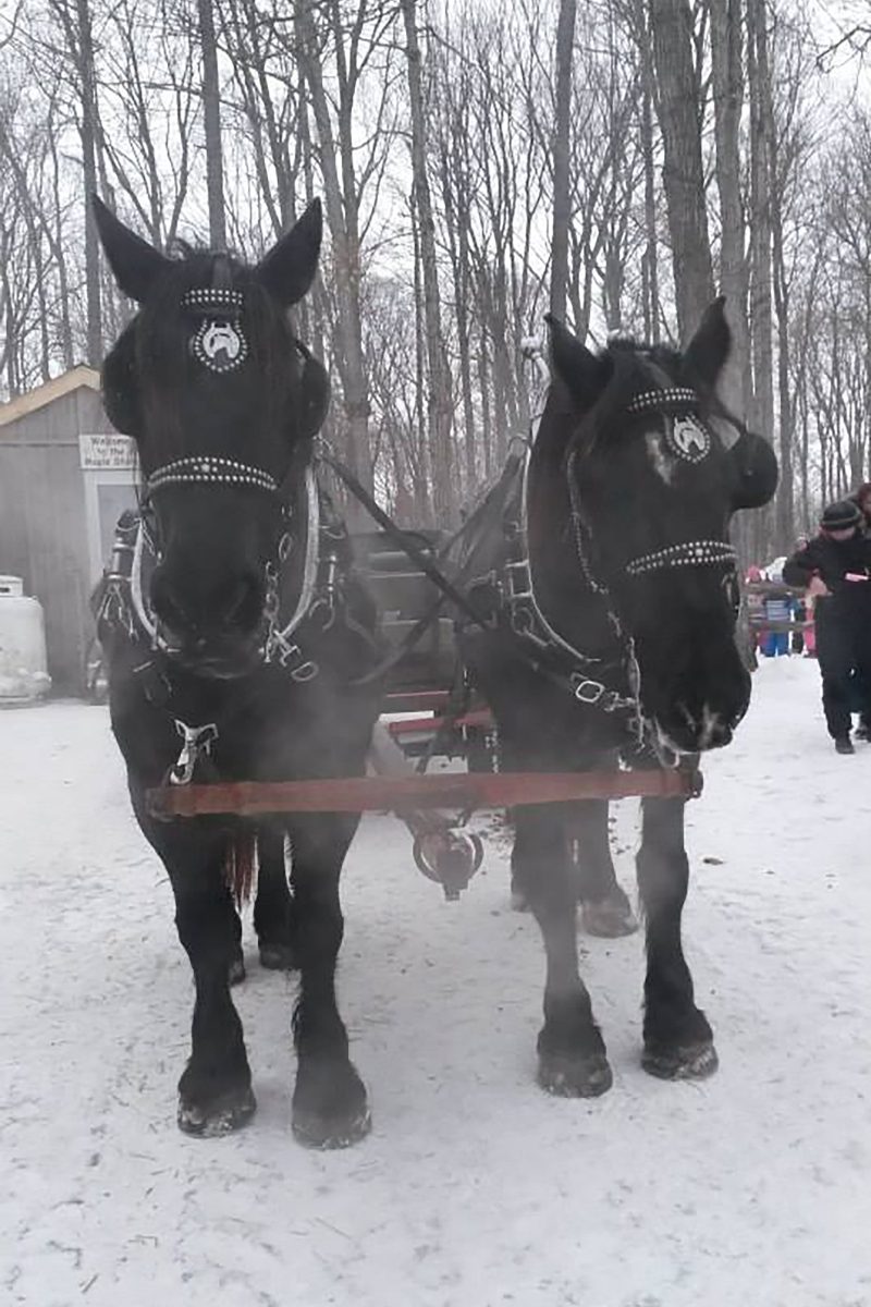 The Inglis Team A Part of the Laurelwood Sleigh Ride
